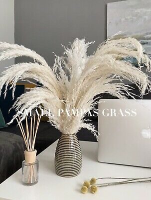 PAMPAS GRASS Small 3 Stems 63 cm Natural White Cortaderia Selloana Home Decor