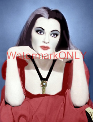 """Yvonne De Carlo """"The Munsters"""" """"Busty"""" """"Lily"""" 60s TV Show """"Pin Up"""" PHOTO! (16)"""