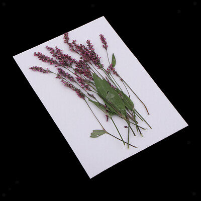 Lots 12 Natural Pressed Dried Flowers DIY Scrapbooking Arts Crafts Decors