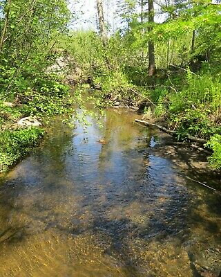 ***Own 11.90 Acres +/- Of Land In Northern Maine Next To The Canadian Border***