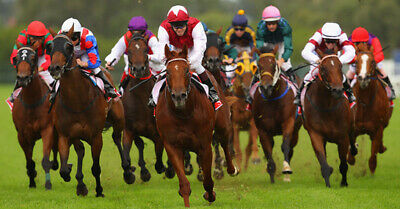 Sky Tips Daily Horse Racing Lay Tip Service Plus Bonus Win Tips - 1 Month Sub