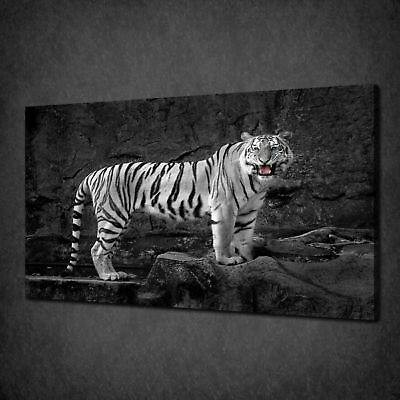 White Siberian Tiger Canvas Print Picture Wall Art Variety Of Sizes