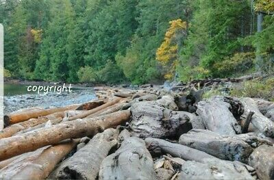 Photo, wallpaper digital picture free worldwide email delivery - Beach logs