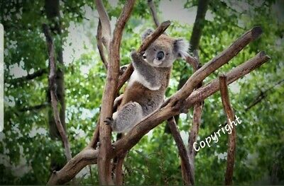 Photo, wallpaper digital picture free worldwide email delivery - Koala