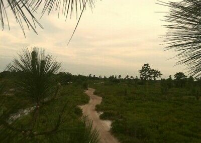 1.25 Acre Lot in Central Florida: W/ Access to a 10,000 Acre Recreational Area!
