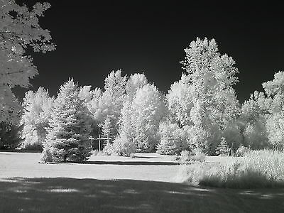 Canon Rebel T6 EOS 1300D 830nm BnW Black and White  IR Infrared converted camera