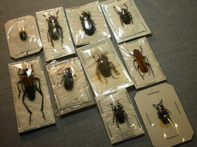 10 insects location data mixed species beetles etc. all   A 1
