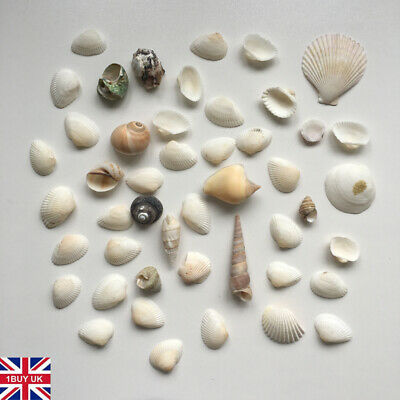 150g Craft Shells Assorted Sea Shell Natural Beach Seashells Mixed Small / Large