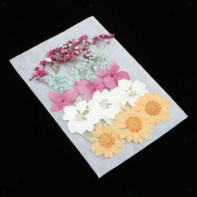 1 Pack Pressed Dried Flower Leaves Multicolor for DIY Card Making Decoration