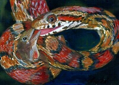 Coral snake caught a lizard,  watercolors