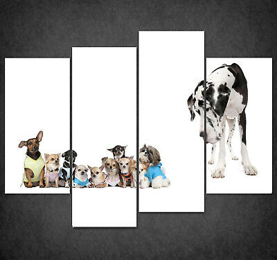 Dogs Big Small Canvas Print Picture Wall Art Home Decor Free Delivery