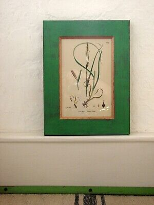 Antique Botanical Print, Sowerby 1780, Beautiful Hand Finished Solid Wood Frame.