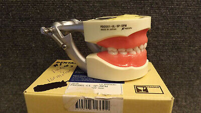 Kilgore D75SHP-920 Silicone Full Primary Dentition Tooth Model NEW Typodont 200