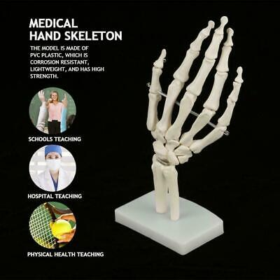 Medical Anatomical Life-size Human Hand Joint Study Skeleton Model  Teaching
