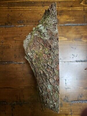 "Maple Burl  11""x5""x 3 1/2"" Carving Craft Art Knife Call"