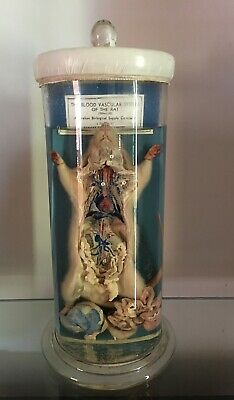 Vintage Science Laboratory Rat Wet Specimen In Glass Case Biology Taxidermy
