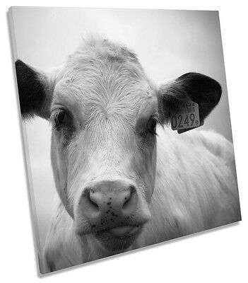 WALL ART CANVAS Picture Print - Funny Cow Face 2 3 - $29 99