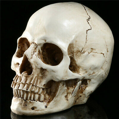 1:1 Life Size Replica Human Skull Model Resin Realistic Retro Medical Art Teach