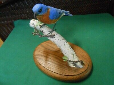 Magnificent ROBIN BIRD Figure on Tree Branch on wood stand-Artist GAIL STANEK