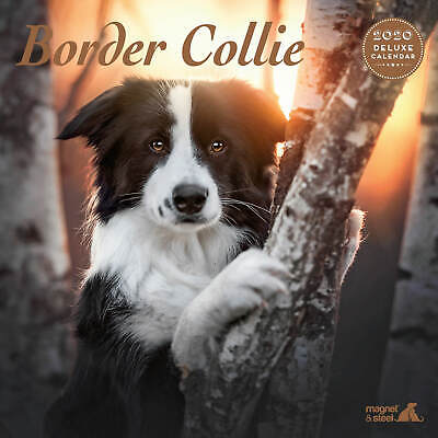 Border Collie 2020 Deluxe Calendar
