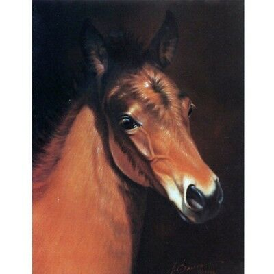 """""""Baby Face"""" - Head of a Foal - 6 Pack of Blank Cards - Print by Jean Barrows"""