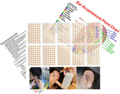 600x Acupuncture Vaccaria Ear Seeds, Chart and Instructions - UK Supplier