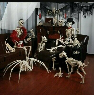 Halloween Life Size Jointed Skeleton Animals Party Props Haunted House Skeleton