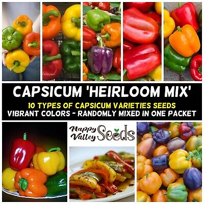 CAPSICUM 'Heirloom Mix' 20+ Seeds RAINBOW spring summer vegetable garden pepper