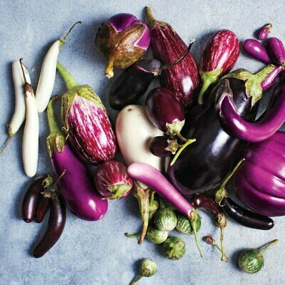 EGGPLANT Heirloom Mix 40+ Seeds ALL TYPES MIXED spring summer vegetable garden