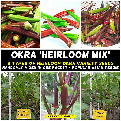 OKRA 'Heirloom Mix' 15+ Seeds ASIAN spring summer vegetable garden GUMBO curries