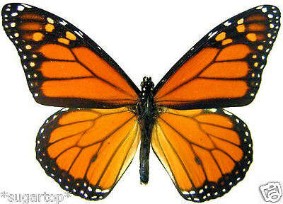 24 x Pretty MONARCH Butterflies Edible Decorations Cup Cake Toppers Rice Paper