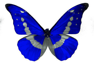 24 x Stunning Royal Blue Butterflies Edible Decorations Cup Cake Toppers Rice P