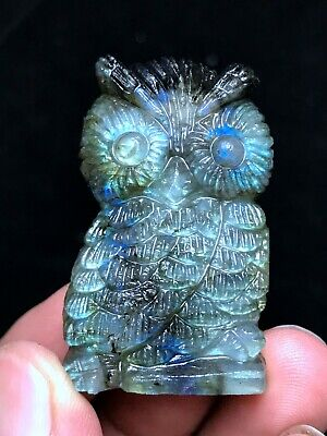 Natural Exquisite Hand-carved Blue Labradorite Animal Crystal Healing Madagascar