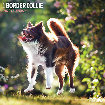 Border Collie 2020 Traditional Calendar