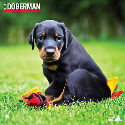 Doberman 2020 Traditional Calendar