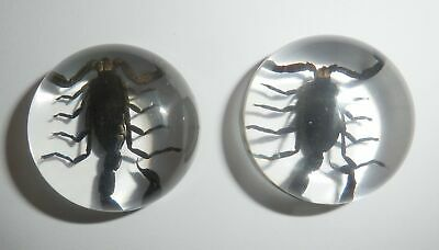 Insect Cabochon Black Scorpion Specimen Round 25 mm Clear 2 pieces Lot