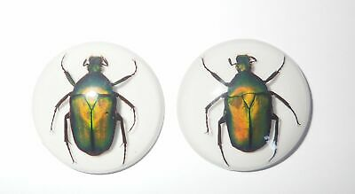 Insect Cabochon Green Rose Chafer Beetle 35 mm Round white bottom 2 pieces Lot