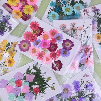 Pressed flower mixed organic natural dried flowers diy art floral decors gif ^