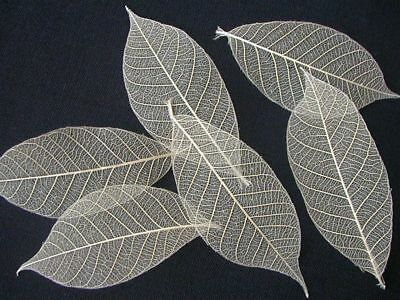 100 Natural skeleton 3-4 inches Leaves Craft Card Topper Art Wedding Table Decor