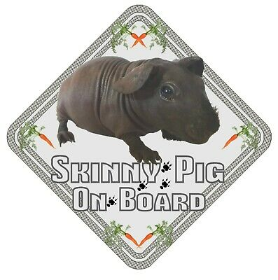 Skinny Pig On Board Car Window Sign  - Guinea Pig Pet Animal Safety