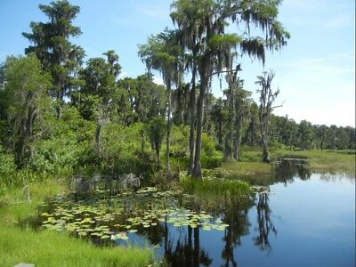8 Acres of Lakefront Property in Central Florida- 1/2 Hour From Disney & Orlando