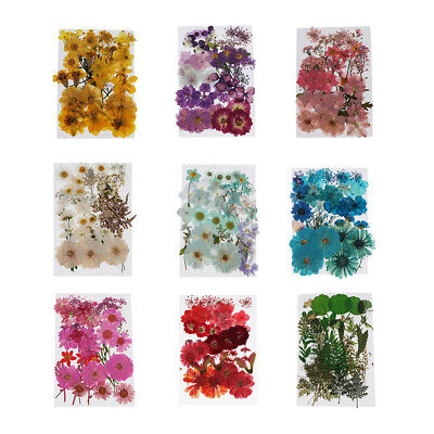 Assroetd Real Dried Flowers Pressed Leaves for Epoxy Resin Jewelry Making