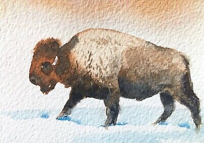 Original Watercolor Bison Buffalo Painting ACEO Art Card