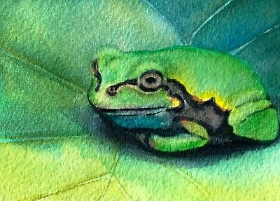 Original Watercolor Tree Frog Painting ACEO Art Card