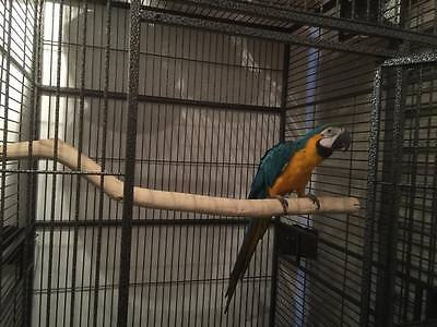 """Manzanita Parrot Perch for your 36"""" wide Bird Cage!!! HOT!!!!"""