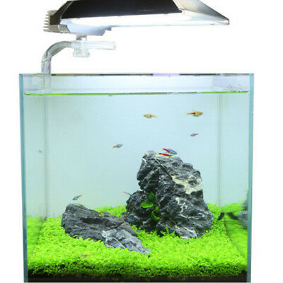 Fish Tank Aquarium Plants Seeds Aquatic Water Grass Foreground Plant Easy-@M