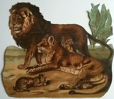 VERY LARGE 29x25cm Antique, Chromo Victorian Scrap. Lion,Lioness,Cubs. see des.