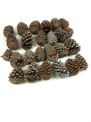 Natural Pine Cone Cones Art Decor Decoration Crafts Lot of 25