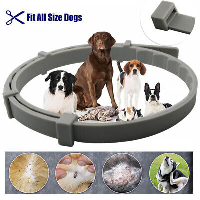 Flea and Tick Control Collar Anti-insect Mosquitoes for Cats Pets 8 Months100%