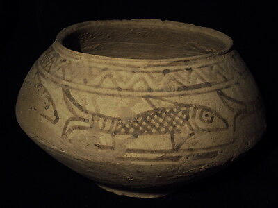 Ancient Huge Size Teracotta Painted Pot with Fishes Indus Valley 2500 BC  #SG617